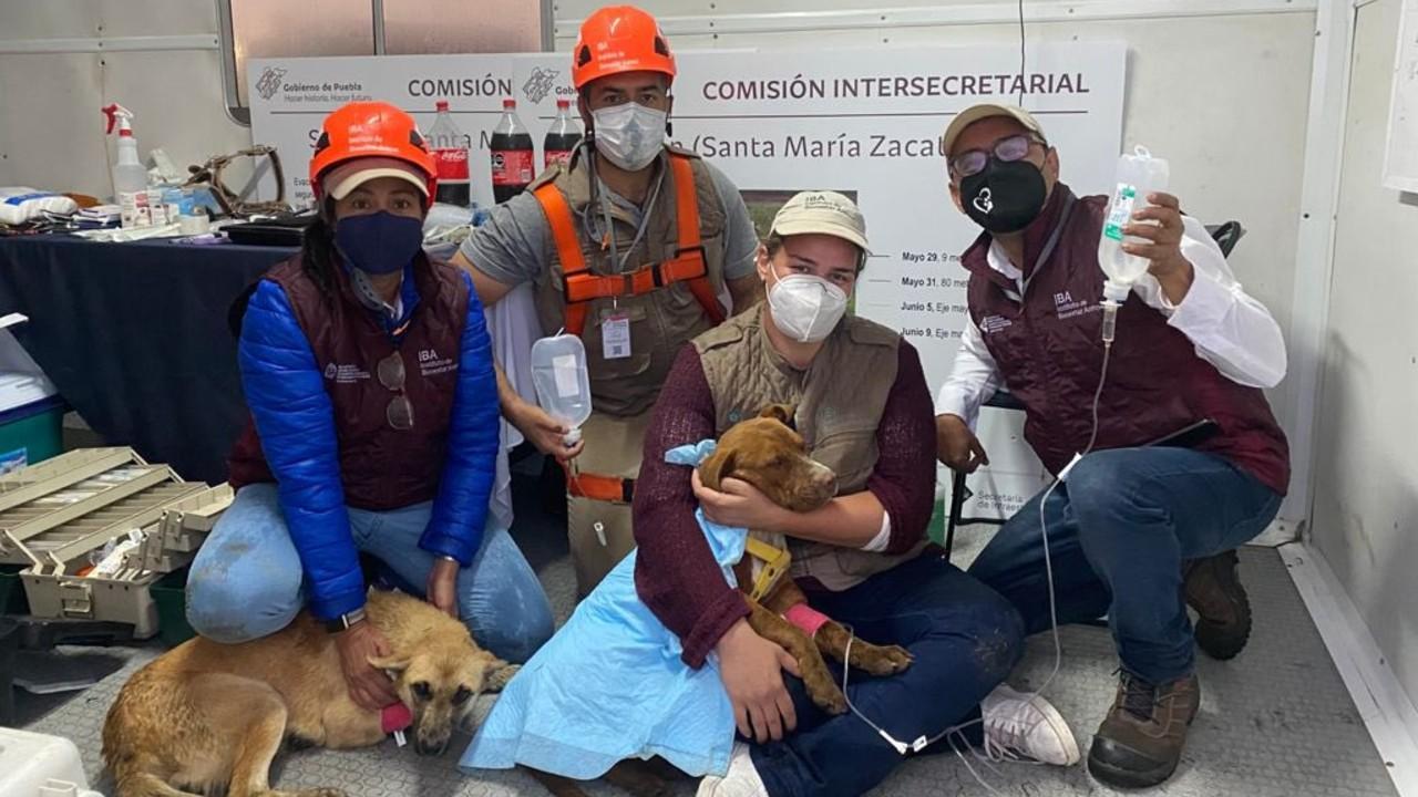 Foto: Instituto del Bienestar Animal
